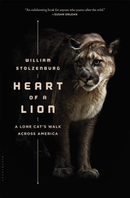 Corazón de un león: un paseo de gato solitario a través de América
