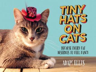 Sombreros minúsculos en gatos: Porque cada gato merece sentir la suposición