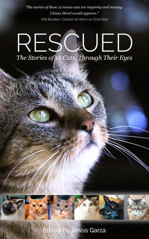 Rescatados: las historias de 12 gatos, a través de sus ojos