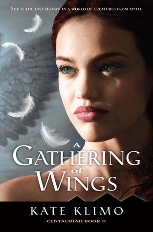 Una reunión de alas